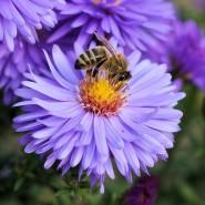 La disparition des insectes menace l'agriculture !
