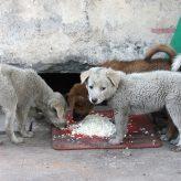Comment nourrir ses chiots ?