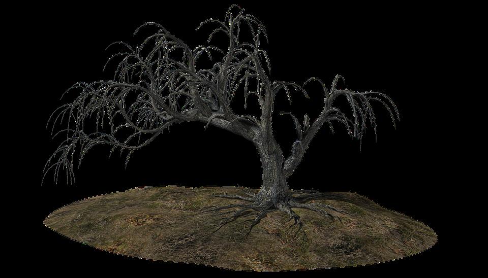 comment d raciner un arbre pour le replanter quand d planter et replanter un arbre redpop. Black Bedroom Furniture Sets. Home Design Ideas
