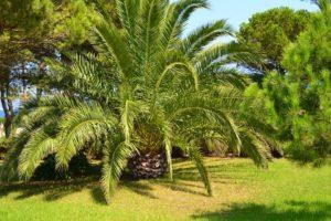 Arbres Ornementaux Arbres Originaux Pour Le Jardin Arbres