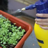 Tout savoir sur les bienfaits du jardinage