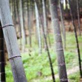Des bambous pour un balcon écolo