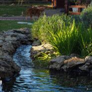 Nos conseils pour installer un point d'eau dans votre jardin